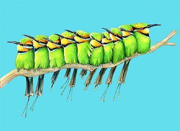 Rainbow Bee-eaters - Rainbow Bee-eater Family by Pat Latas
