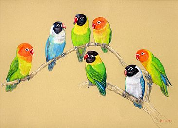 The Redbeaks - Hooded and Fischer's Lovebirds by Pat Latas