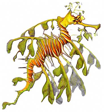 Weedy Seadragon - Weedy Seadragon by Pat Latas