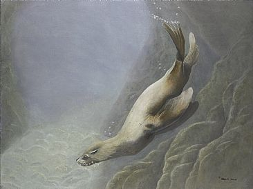 Steller Cove - Steller Sea Lion by Patricia Mansell