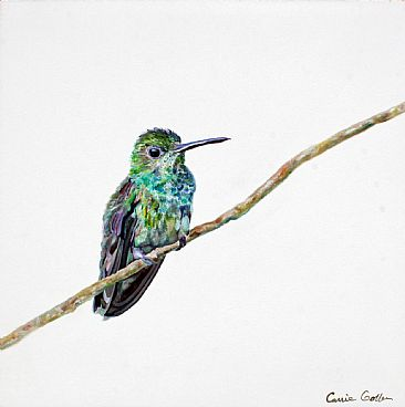 Percival - hummingbird by Carrie Goller