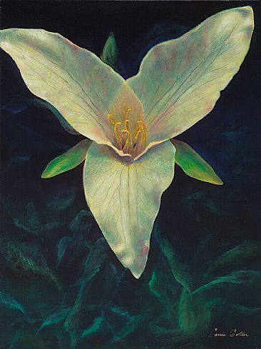 Trillium (Giclee on Canvas) - Trillium Flower by Carrie Goller