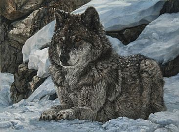 Alpha Male - Gray Wolf by Karla Mann