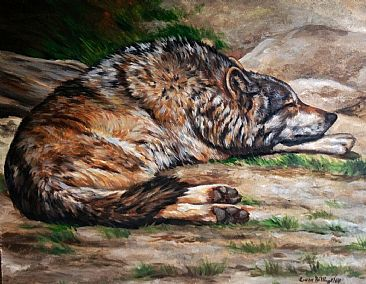 Mexican Wolf - Mexican Wolf by Cindy Billingsley