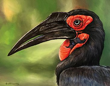 Southern Ground Hornbill - Southern ground Hornbill bird by Cindy Billingsley