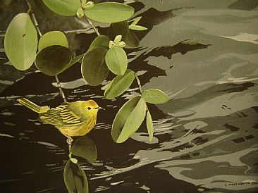 Yellow Warbler in mangroves - Yellow Warbler in mangroves by Lionel Worrell