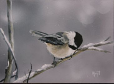 CHILLIN  - CHICKADEE  by Margit Sampogna