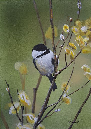 spring is here - chickadees by Margit Sampogna