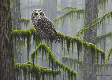 Mossy Forest - Barred Owl by Joseph Koensgen