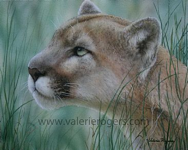 Watching - Cougar by Valerie Rogers