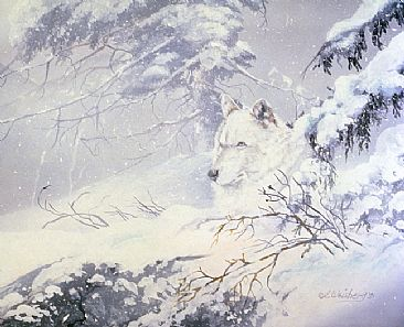 Quiet Storm - Artic Wolf by Kathryn Weisberg