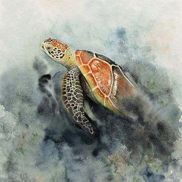 Eclipse 6 - Sea Turtle by Norbert Gramer