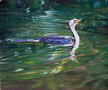 Little pied cormorant - Little pied cormorant by Susan Jane Lees