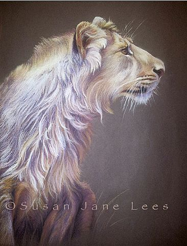 Prince of Asia - Juvenile Asiatic lion by Susan Jane Lees