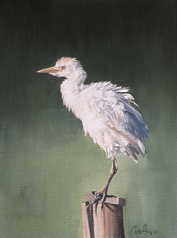 Egret - Cattle Egret by Peter Gray
