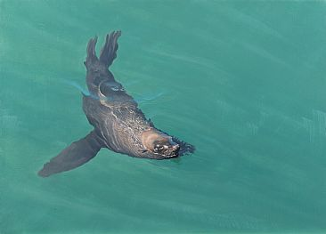 Harbour House Sea - Cape fur seal by Peter Gray
