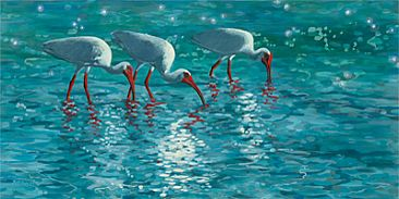 Crystal Blue Persuasion - White Ibis On Beach by Megan Kissinger