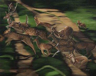 The Hunt -  The Dhole ( Asiatic wild dog) hunting Cheetal (Spotted Deer) - The Bandipur Tiger Reserve. by Sunita Dhairyam