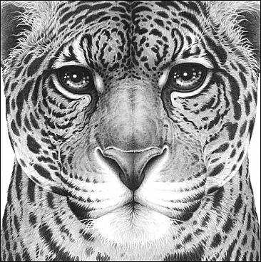 Power - Jaguar portrait by Gary Hodges