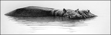 Shimmer - Hippo mother and calf by Gary Hodges