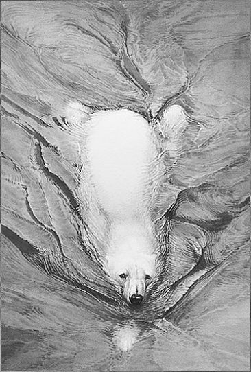 Polar Bear Swimming - Polar Bear open edition signed by Gary Hodges