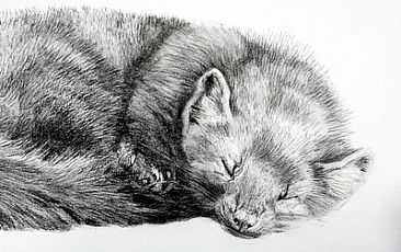 Pine Martin Resting - Pine Martin by Peggy Sowden