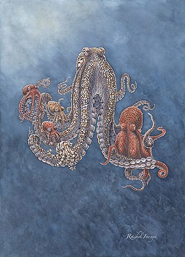 Stuck on You SOLD - Octopuses of the Sea of Cortez by Rachel Ivanyi