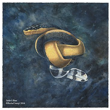 Sailor's Knot - Yellow-bellied Sea Snake, Hydrophis platura by Rachel Ivanyi
