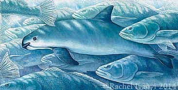 Net Loss-Two Critically Endangered species endemic to the Sea of Cortez: the Vaquita, Phocoena sinus, in a school of Totoaba, Totoaba macdonaldibyRachelIvanyi