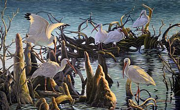 Council of the Elders - White Ibis by Valentin Katrandzhiev