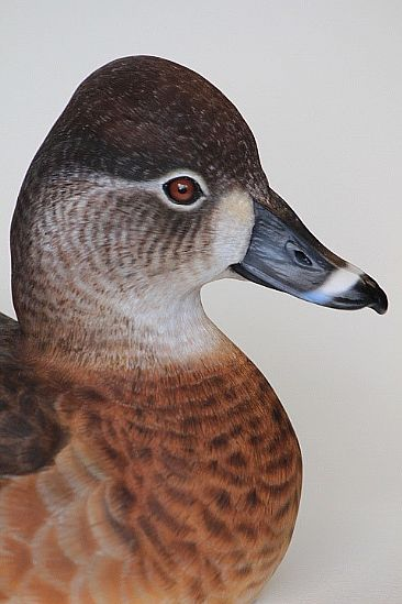 Female Ringneck duck - Decorative decoy by Yves Laurent