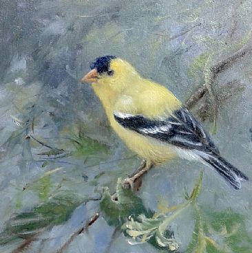 Summer Gold  - American Goldfinch by Mary Erickson
