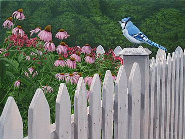 Break of Dawn - Bluejay on a white picket fence by Ron Plaizier