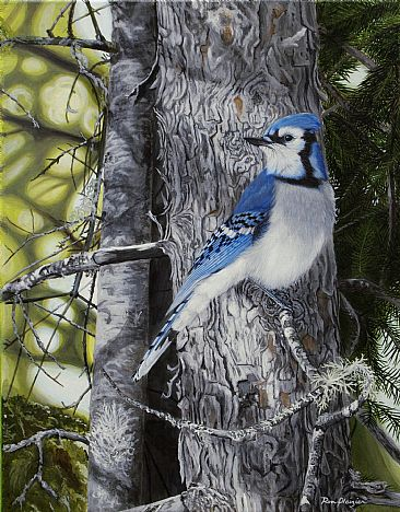 Forest Veil - Bluejay - Bluejay by Ron Plaizier