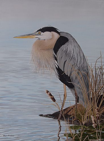 Steady Gaze - Blue Heron - Blue Heron by Ron Plaizier