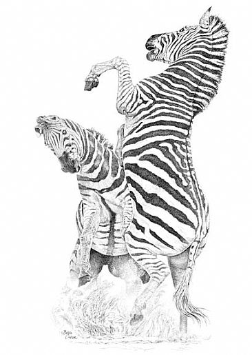 The Challenge - zebras by Becci Crowe