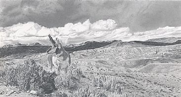 Looking Back - Pronghorn antelope by Martha Thompson