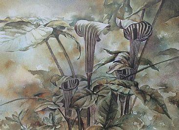 Just Jacks - Jack-in-the-Pulpit wildflowers by Jan Lutz