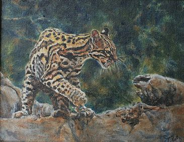 Margay - Margay cat by Jan Lutz