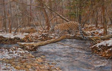 Crossing the Creek - Amur leopard by Jan Lutz