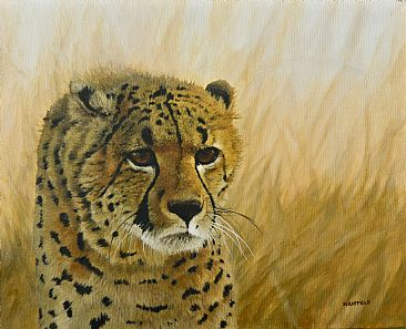 Cheetah - Cheetah in Africa by Natalie Raffield
