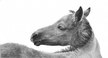 Christmas Foal - Mustang by Amy Larson