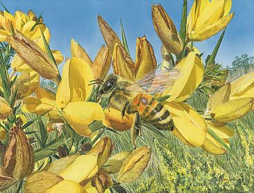 Bee Aware - Honeybee on Gorse by Fiona Goulding