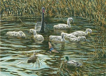Intruders - Birds - Black Swans and Cygnets by Fiona Goulding