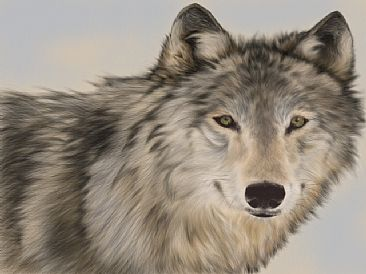Timber - Timber Wolf by Lyn Vik