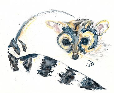 Shy - Ringtail by Judy Studwell