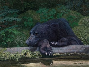 Chillin' - Black Bear by Caroline Brooks