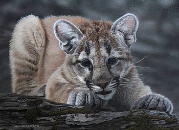 Cougar Curiosity - Cougar Cub by Caroline Brooks