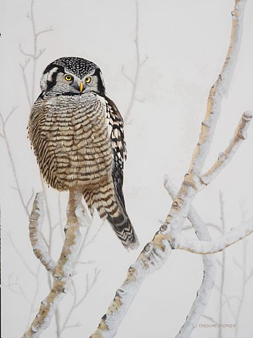 Mid-Day Hunter - Northern Hawk Owl by Caroline Brooks