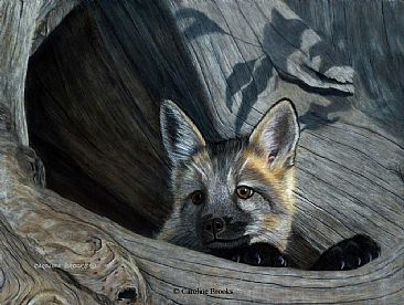 Cautious Appearance - Red Fox Kit - Red fox by Caroline Brooks